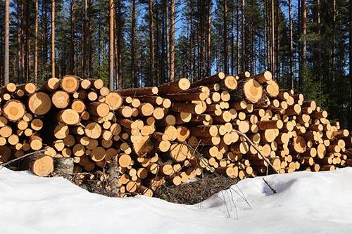 Нижний склад (лесозаготовка)